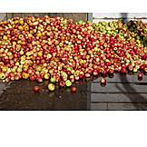 Fruit, Apples, Apple Harvest