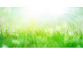 Sunlight, Meadow, Spring