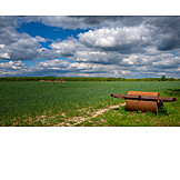 Agriculture, Corn Field, Roller