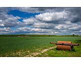 Landwirtschaft, Getreidefeld, Ackerwalze