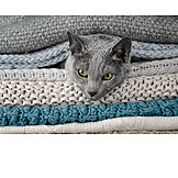 Cat, Blanket, Look Out