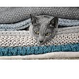 Katze, Decke, Herausschauen