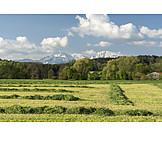 Wiese, Landwirtschaft, Gemäht