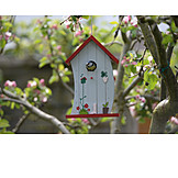 Great Tit, Birdhouse