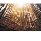 Wald, Bäume, Herbstwald