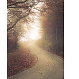 Footpath, Forest, Autumn