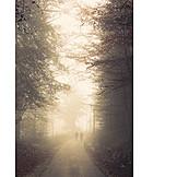 Nebel, Herbstwald, Herbstspaziergang