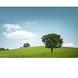Tree, Meadow, Hill