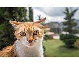 Cat, Tramp