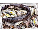 Fish, Fishing, Prepared Fish