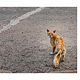 Katze, Streuner