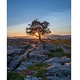 Tree, North Yorkshire