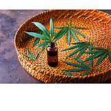 Marijuana plant, Essential oil, Hanföl