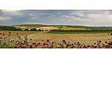 Agriculture, Fields, Cultural Landscape