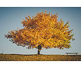 Tree, Autumn Colors