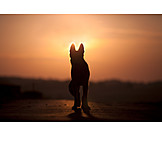 Silhouette, Dog, Sunset