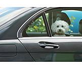 Car, Dog