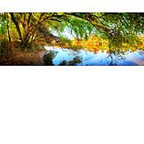 Tree, Autumn, River
