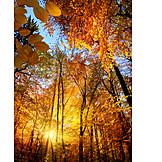 Herbstwald, Herbstlich, Herbstfarben