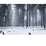 Forest, Winter, Conifers, Snow