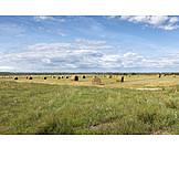 Feld, Landwirtschaft, Strohballen