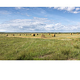 Field, Agriculture, Straw Bales