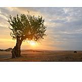 Sunset, Tree