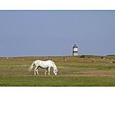 Pferd, Leuchtturm