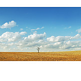 Tree, Field