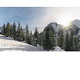 Winter Landscape, Tirol, Fir Forest