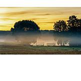 Sunrise, Agriculture, Morning Fog
