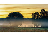 Sunrise, Agriculture, Morning Fog
