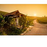 Vineyard, Vineyard, Summerhouse