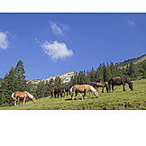 Horses, Mountain Meadow