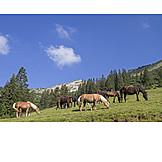 Pferde, Bergwiese