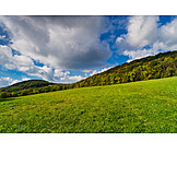 Meadow, Forest, Cumulus