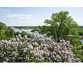 Spring, Weser