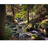 Stream, Forest