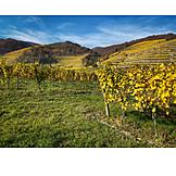 Landwirtschaft, Weinberg, Weinanbau