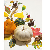 Autumn, Squash, Vegetables