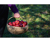 Basket, Harvest, Apples