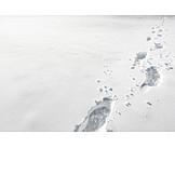 Winter, Snow, Footprints