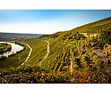 Vineyard, Wine, Growing region, Wine slope