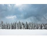 Winter, Coniferous, Snowy