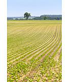 Feld, Landwirtschaft, Gemüseanbau