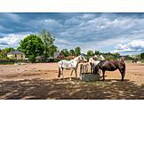 Horses, Horse Ranch