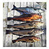 Fishing, Prepared Fish