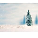 Snow, Christmas Tree
