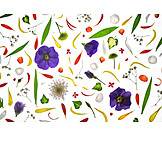 Flowers, Floral