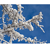 Snow, Frost, Branches